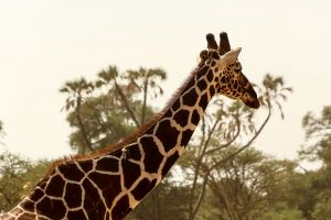 africa wildlife adventure photography sky wanderlust outdoor landscape