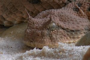 animal close-up wild weird creepy scales scary eyes amphibian