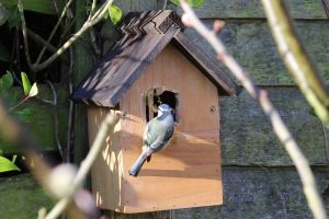 animal cute avian bird house