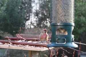 animal cute perched little eating