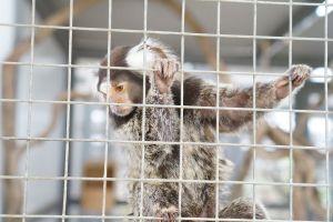 animal monkey zoo