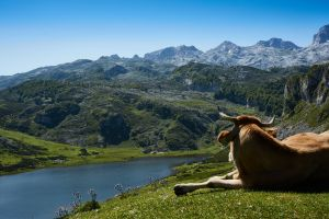 animal mountains nature cow environment landscape scenic outdoorchallenge grass horns