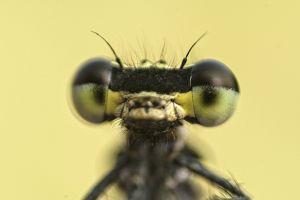 animal photography mini animal portrait insects explore macro eyes stock wildlife small world