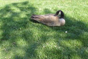 animal rest daylight grass green