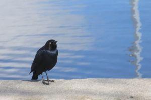 animal water black
