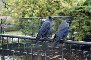 animals amsterdam netherlands zoo landscape