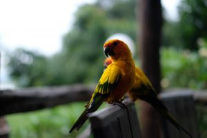 animals parrots daytime blurred background feathers wildlife wings little perched colors