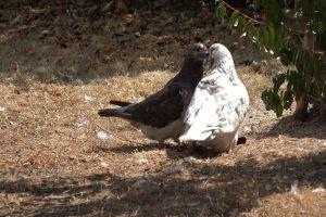 animals plumage nature