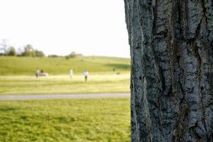 atmosphere tree trunk bark blur background blurred close up