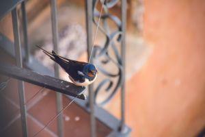 balcony spain mediterranean swallow nature animal