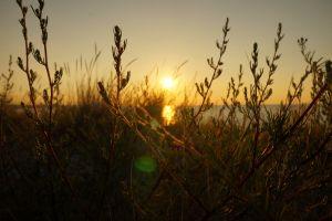 beach sunset denmark