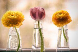 beautiful flowers fresh flowers flower arrangement flowers