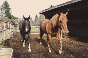 beautiful horse ranch barn horse head