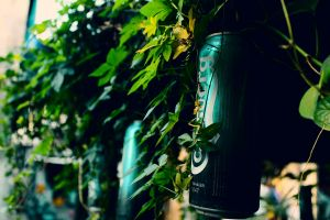 beer greenery adobe photoshop background street photography green
