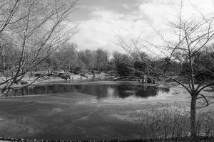 black and white landscape botanical garden garden