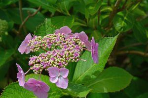 bloom flowering flower plant flower garden scented flower buds flowering plant scented plant garden plant