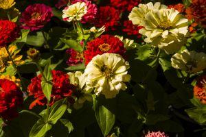 bloom keukenhof flora grass gardening yellow natural color nature flower