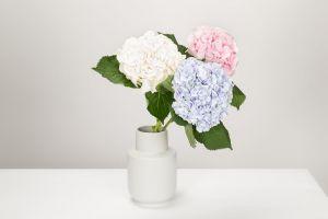 bloom vase blossom petals flowers flora
