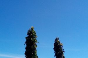 blue sky blue nature trees