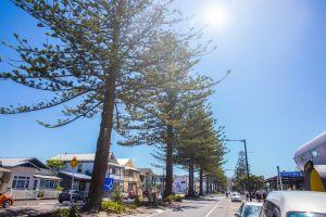 blue sky roads trees sun napier