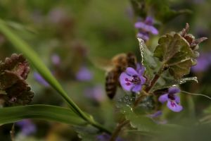 blurred bee foraging plants insect flowers