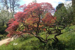 botanical garden tree park english garden garden
