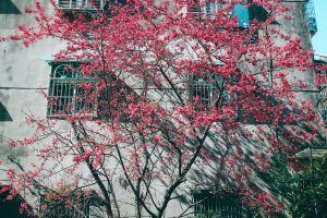 branches windows daytime tree flora flowers