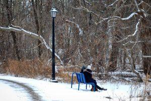 canada park bench park winter lamp post snow nature
