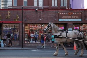 carriage horse people transportation system tour