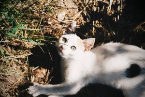 cat's eyes cat kitty focus blur kitten white animal photography feline little