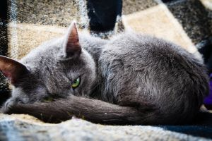 cats green eyes animals hd wallpapers grey cat