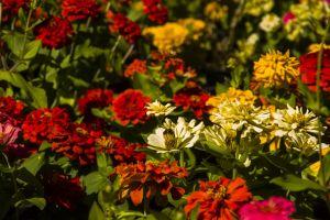 closeup blue garden floral flora bloom beauty park landscape colorful