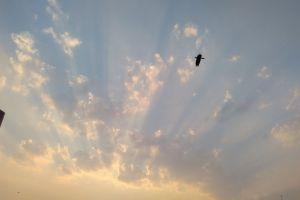 cloud sky crow