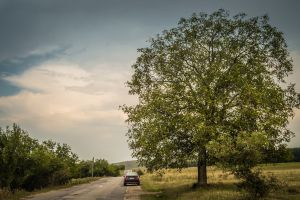 clouds car adventure big tree road landscape outdoor