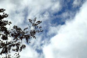 clouds sky tree time-lapse blue sky low angle shot motion