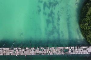 coast water aerial shot ocean sea trees