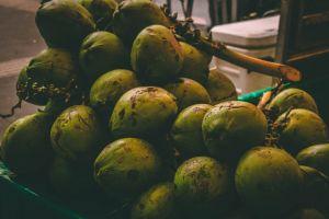 coconut fruit summer