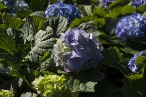 color blooming flowerbed botany outdoor longwood petal field bloom colorful