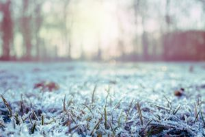 color grass ice season beautiful winter freezing snow frosty landscape
