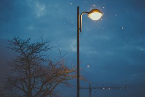 color light mood blue lamp post tree