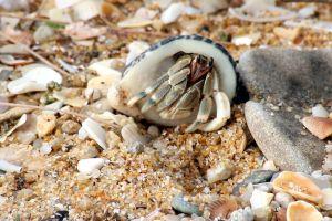 crab rocks animal hermit crab sand cute