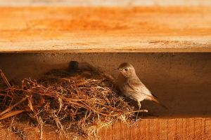 cute chirping flying nest brown animals escape