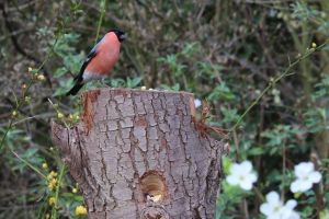 cute tree trunk perched eating animal