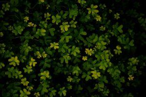 dark green luck nature plants green