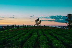 dawn farm cropland growth farmland field crops