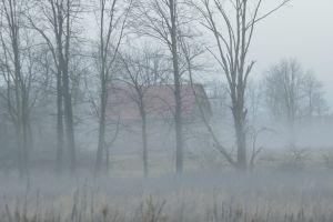 dawn fog barn