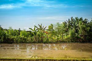 day bali green summer water daylight trees reflection landscape sky