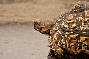 daylight environment tortoise colors water wild life wildlife turtle animal wild