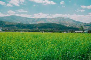 daytime grass scenic farm field mountains environment