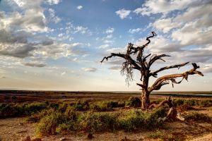 dead tree tree rocks water landscape stones scenic daylight clouds field